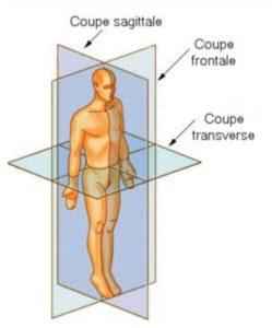 Système de référence anatomique