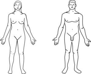 Positions de référence anatomique. Source: Wikimedia Commons