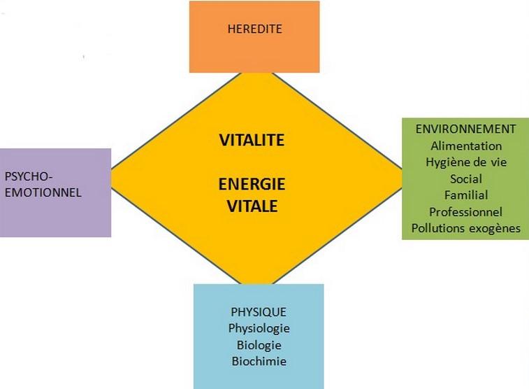 Approche holistique – Ses principes