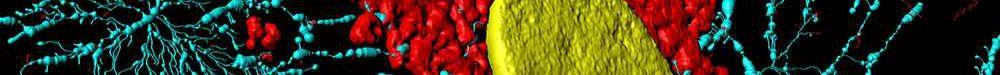 Fibroblaste avec noyau