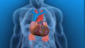 Les connaissances de base en anatomie peuvent aider à comprendre nos maladies.