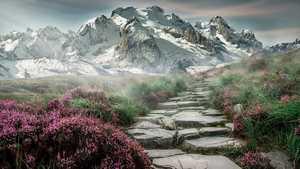 Chemin vers la nature