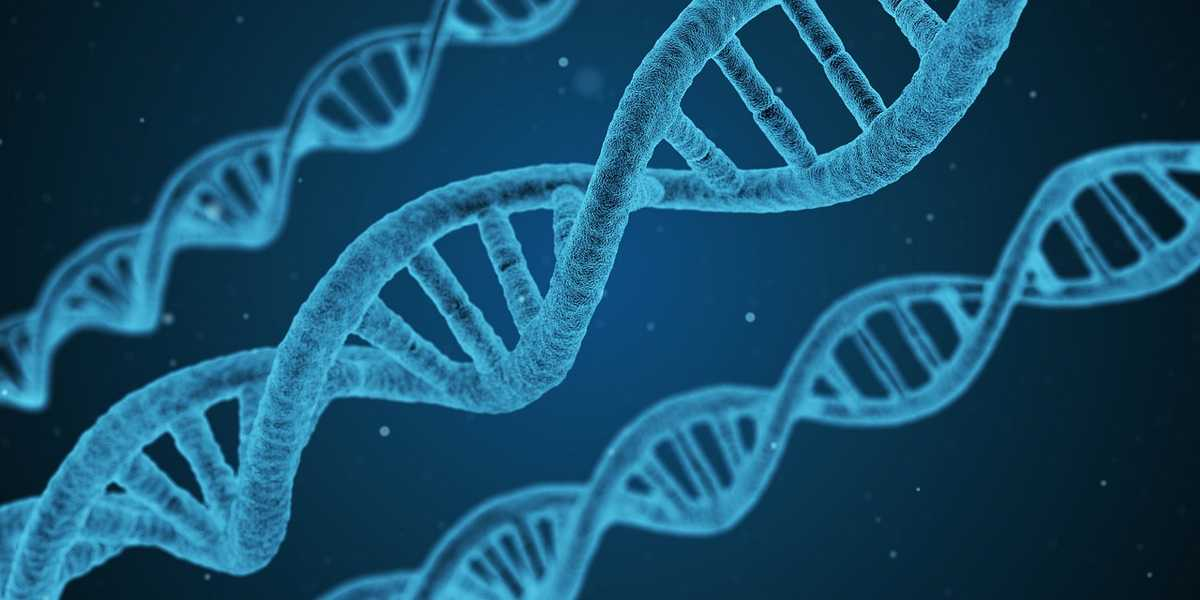 Chaîne d'ADN