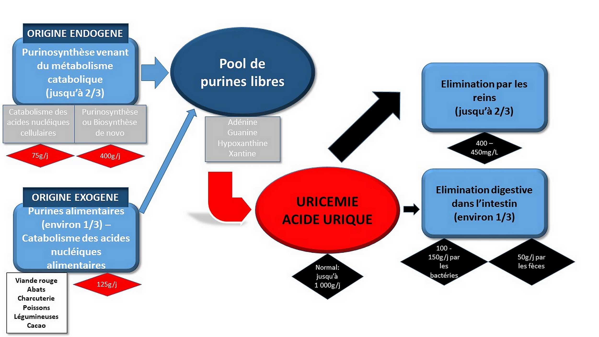 Elimination Acide urique (NHA)