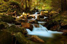 La qualité de l'eau dépend beaucoup de sa pureté.