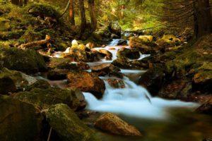 L'importance de la pureté de l'eau – Attention aux minéraux dans l'eau qui ne sont pas assimilables pour l'être humain hétérotrophe !