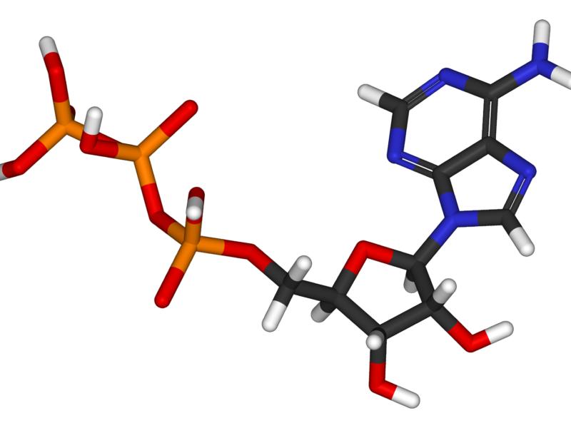Molécule ATP