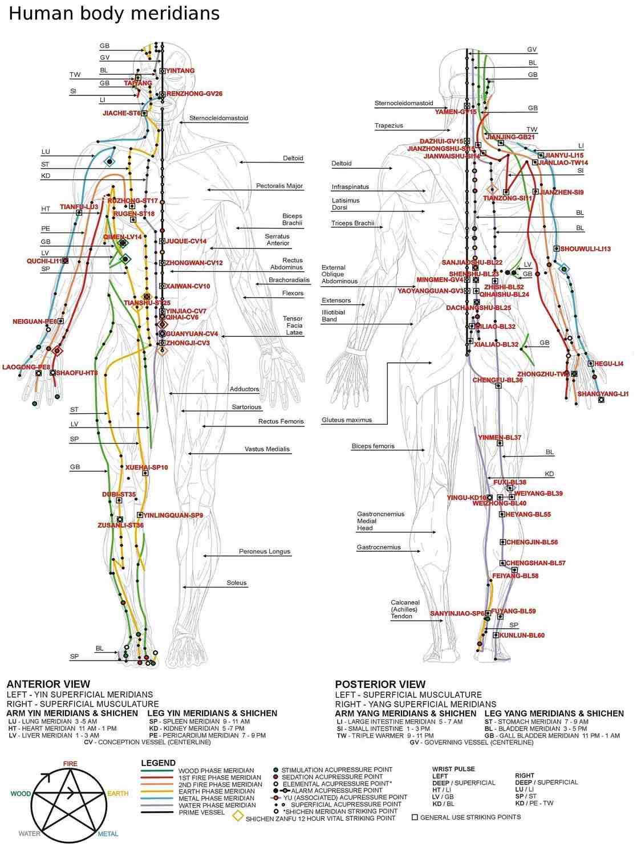 Carte des méridiens selon la Médecine traditionnelle chinoise