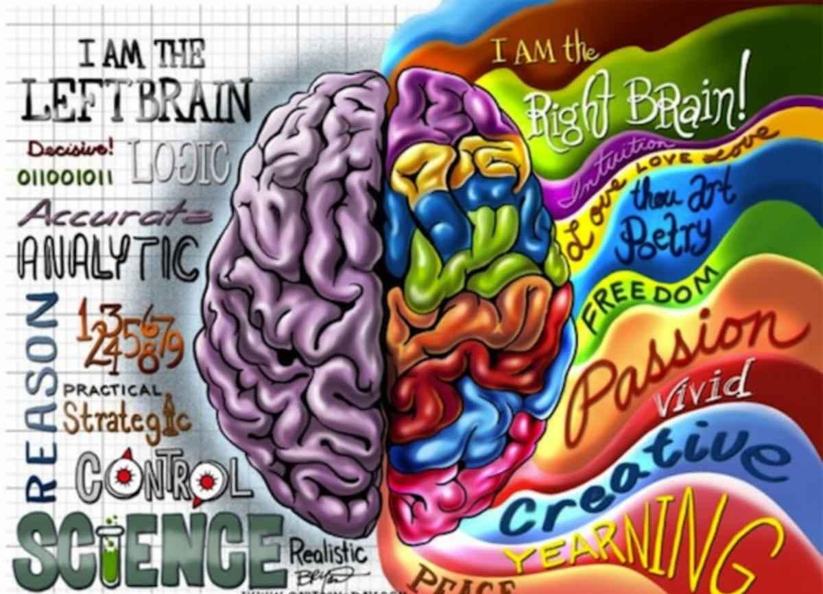 Hémisphères cérébraux